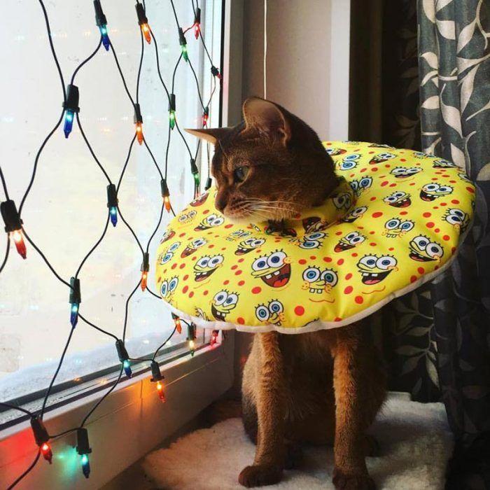 Кот в воротничке на окне