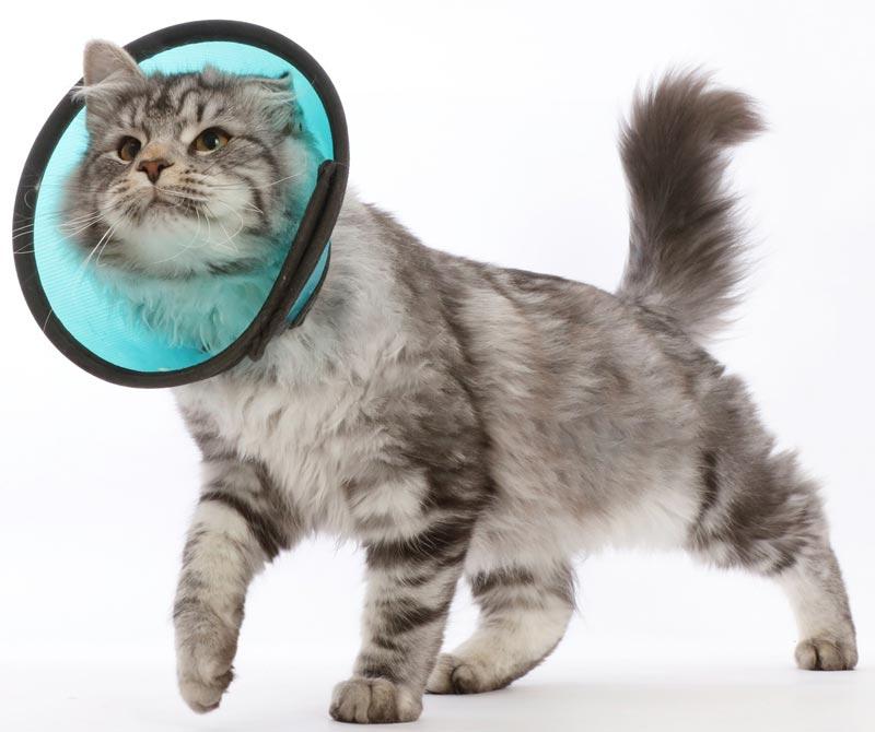 Как сделать воротник для кошки своими руками из пластиковой бутылки