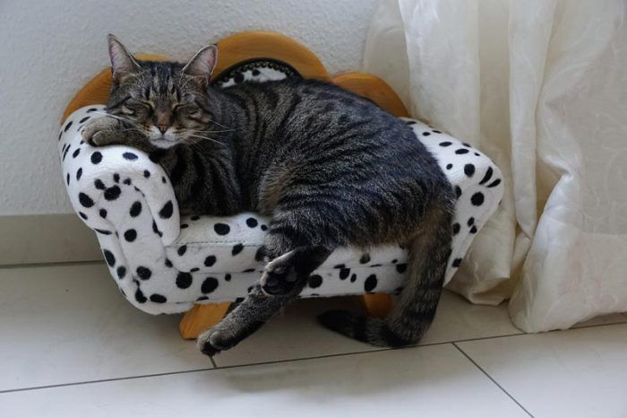 Маленький диван для кошки