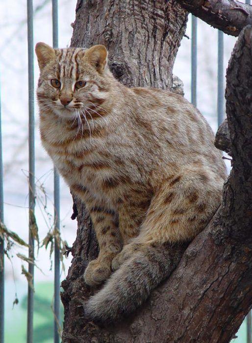 Кошка сидит на дереве