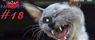 Смешное видео с котом