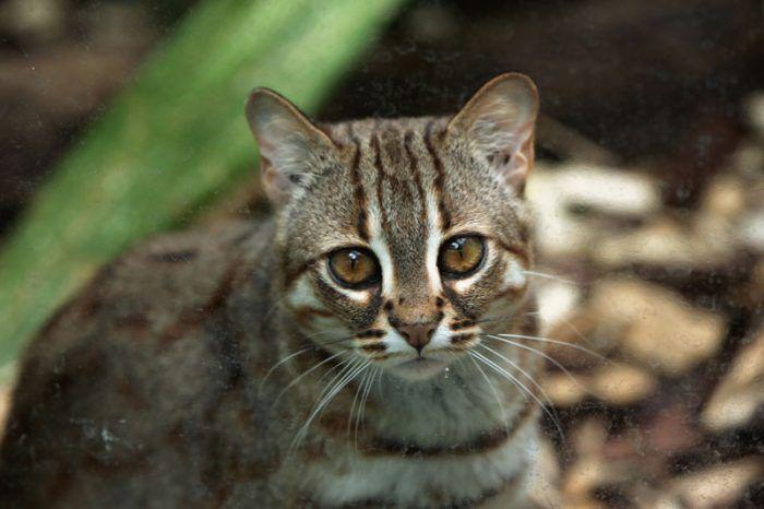 Красивый ржавый кот
