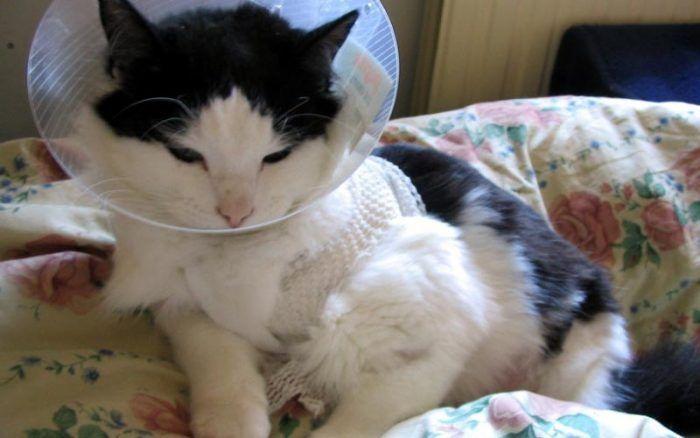 Кот ненавидит воротник