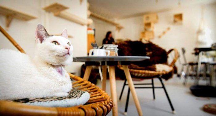 Кот ждет гостей