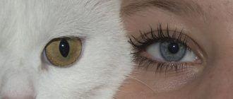 Кот и хозяин