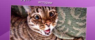 Удивленный котик