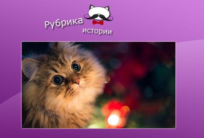 История о котике