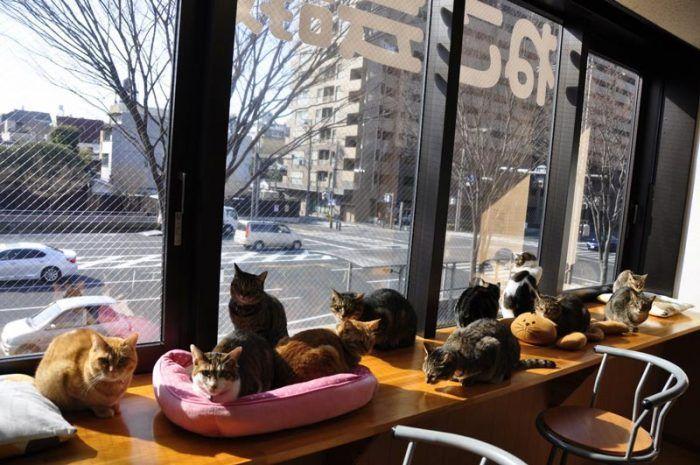 Кошки на подоконнике