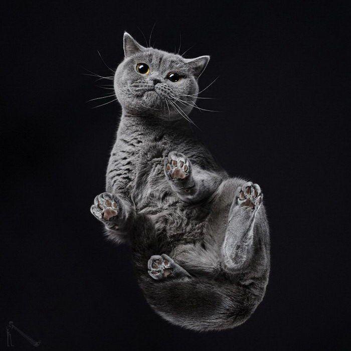 Серый кот на черном фоне