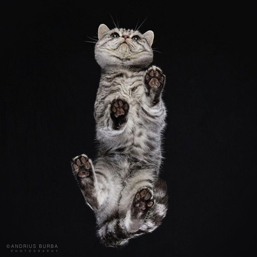 Серо-белый кот на черном фоне
