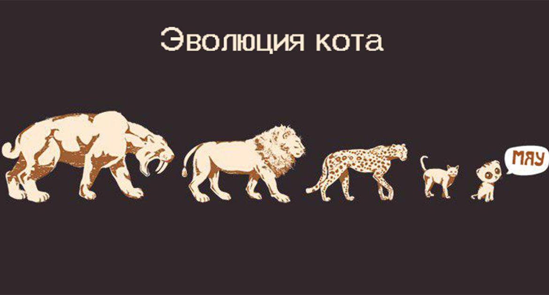 Эволюция кошки