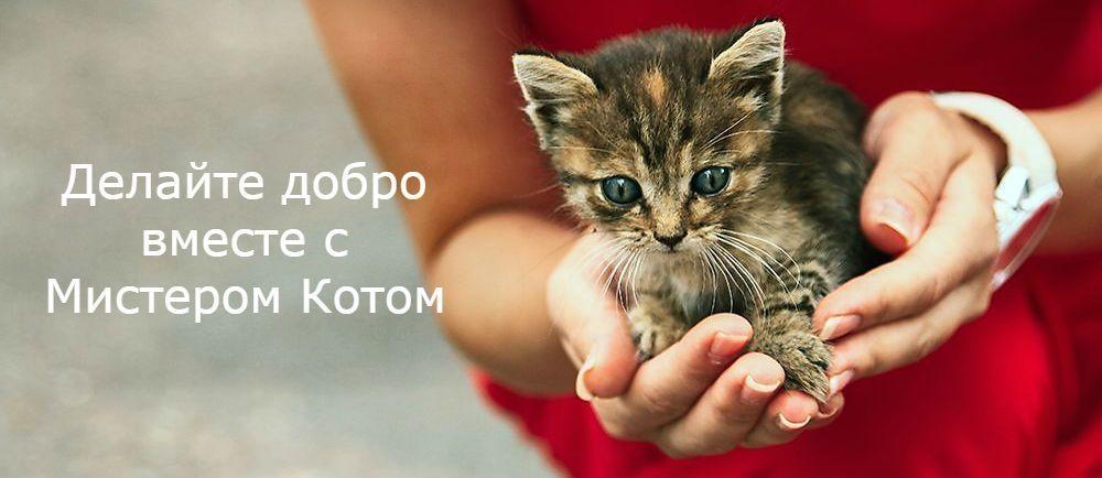 Благотворительность вместе с Мистером Котом
