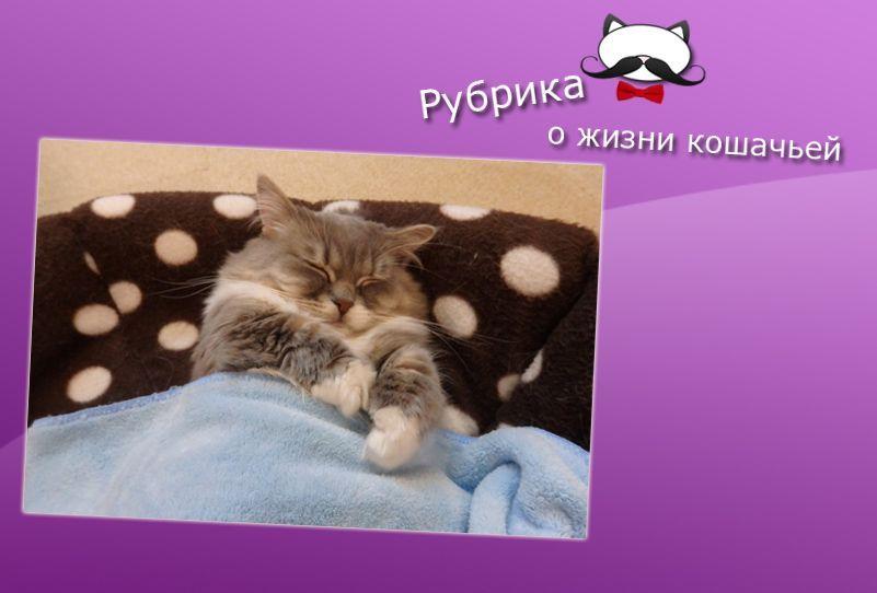 Котик в кровати