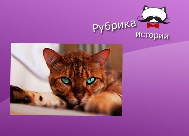 О котике