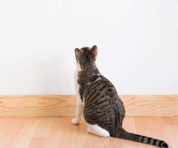 Кот смотрит в стену