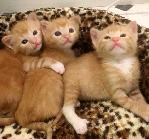 Большие котята