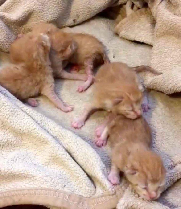 Котятам несколько дней