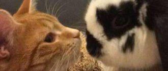 Кролик и кот дружат