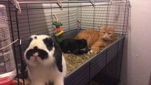 Три животных в клетке