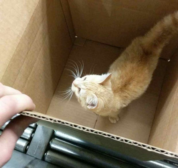 Кошка в коробке