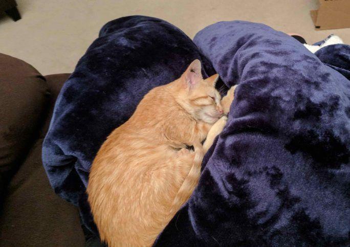 Спит на синей подушке