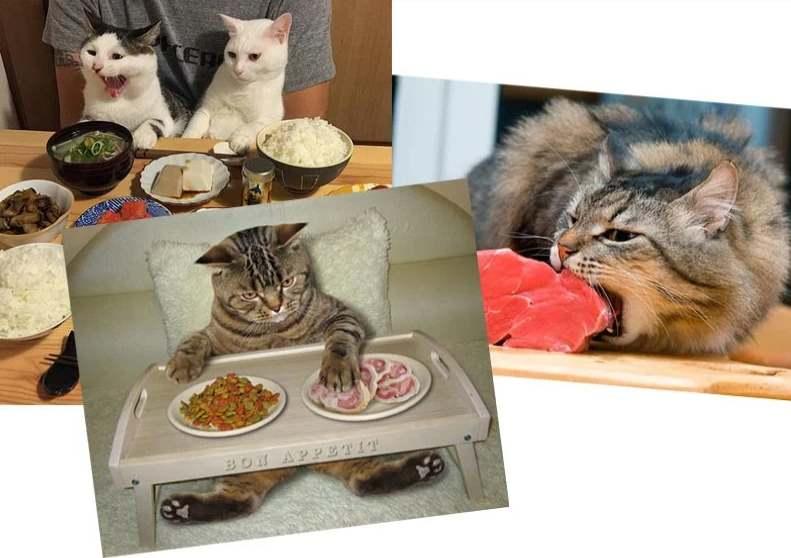 Три кота едят