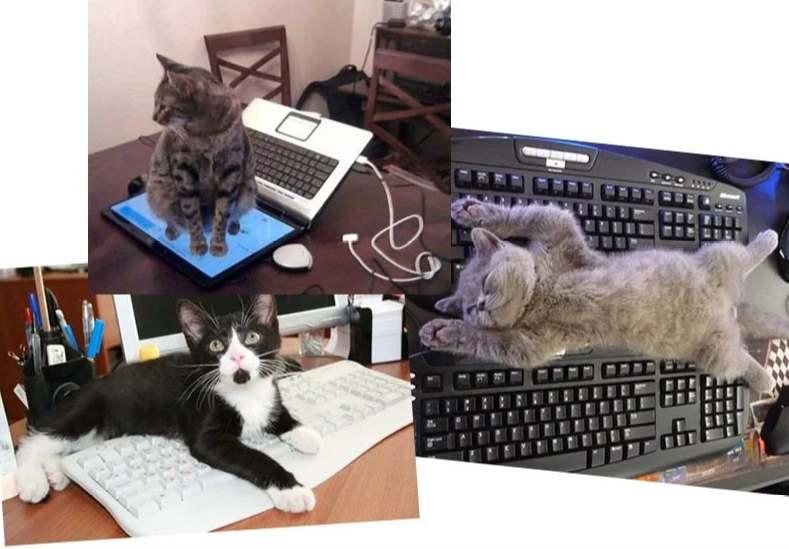 На клавиатуре и мониторе