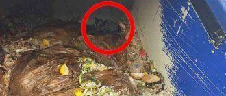 Котенок в мусорке