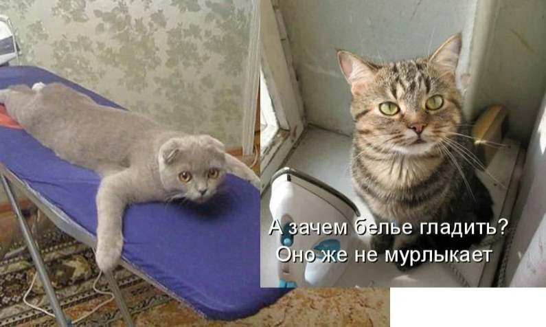 Погладьте кота