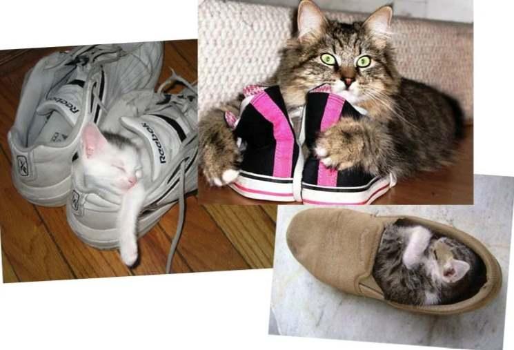 Коты считают, что ботинки их