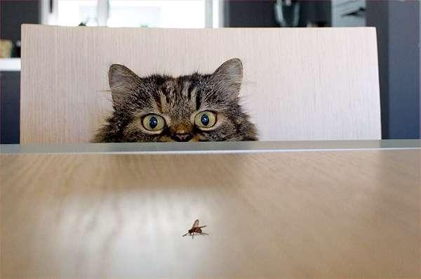 Кот и муха