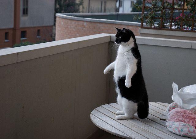 Кот дома один