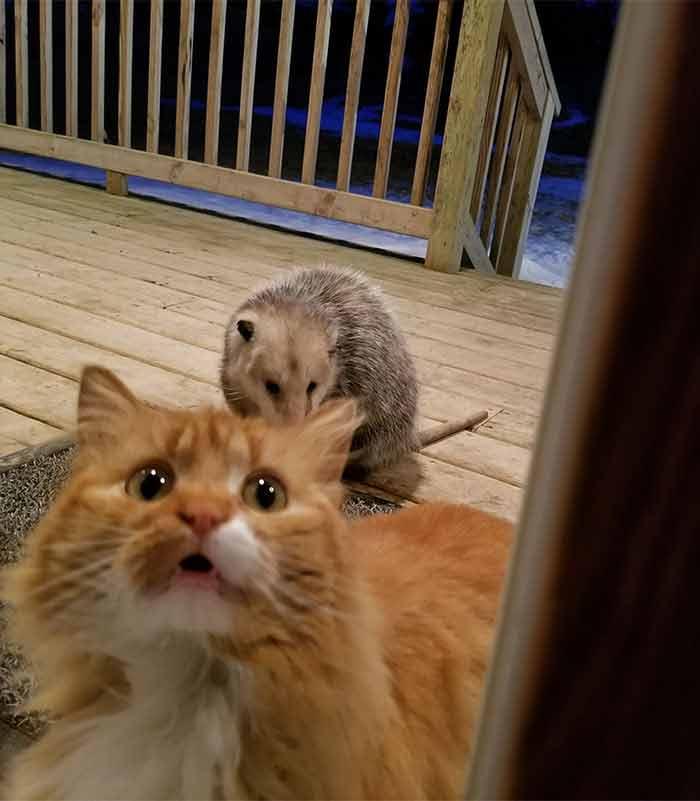 Страдания кота
