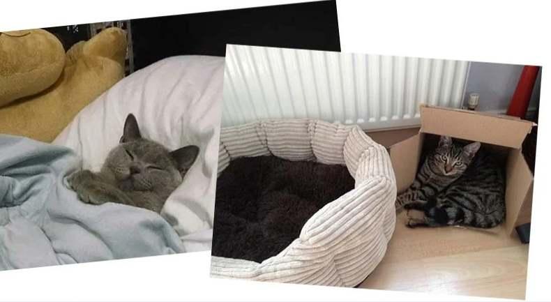 Кот в кровати