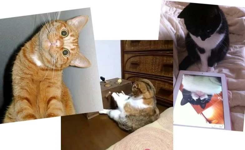 Три смешных кота