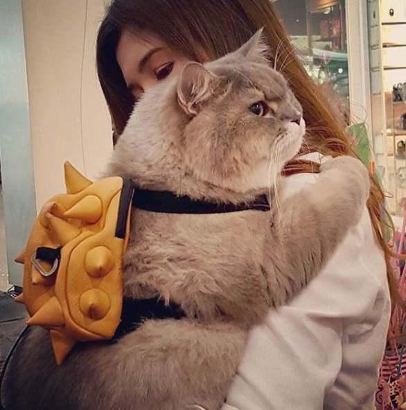 Пушистый котик на руках
