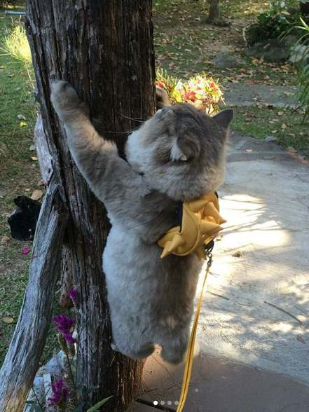 Бон Бон на дереве