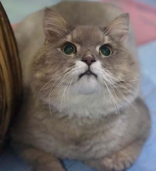 Красивый пушистый кот