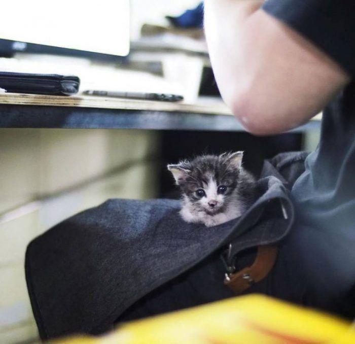 Маленький котенок на коленях