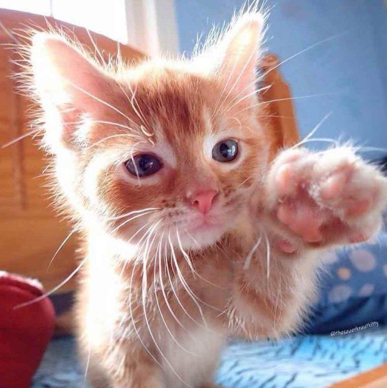 Дай пять от котика