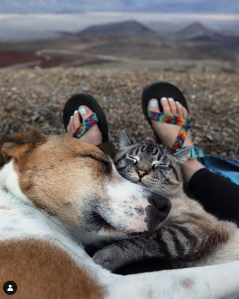 Кот и пес вместе спят