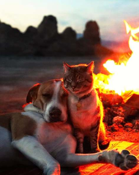 Два друга у огня