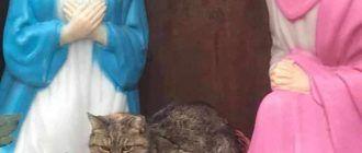 Кот с Марией