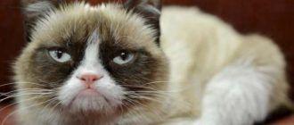 Сердитая Grumpy Cat