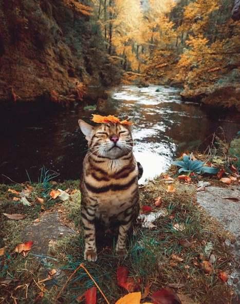 Листик на кошке