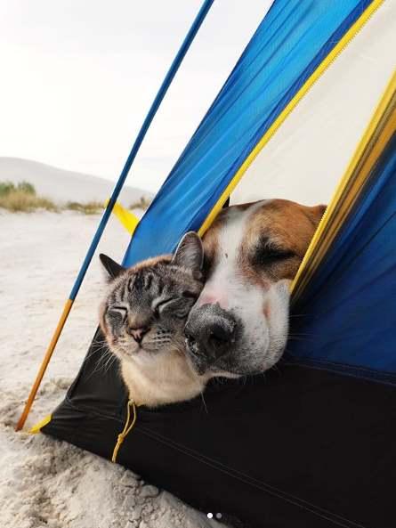 Кот и собака вместе