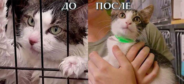 Котик до после