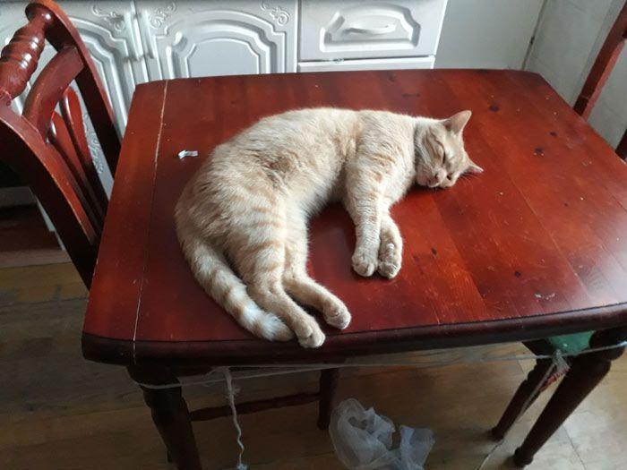 Спит на столе