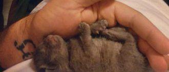 Малышка Багира