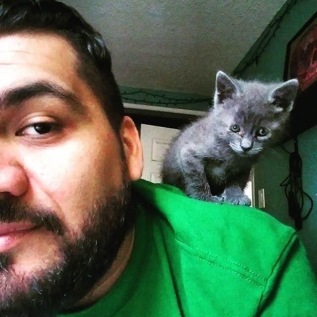 Рэй и котенок
